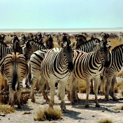namibia1523