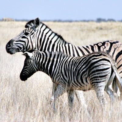 namibia2902