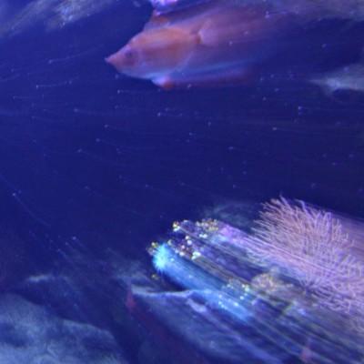 pesci091