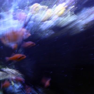 pesci093