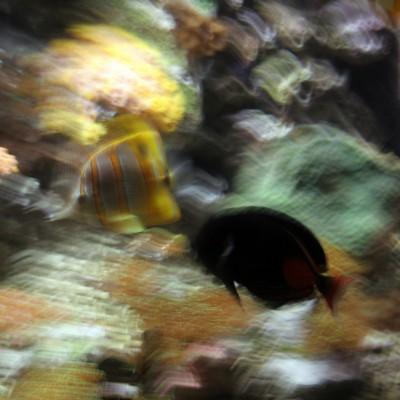 pesci110