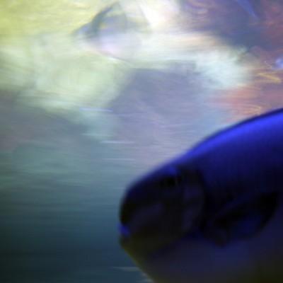 pesci133