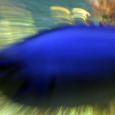 pesci134