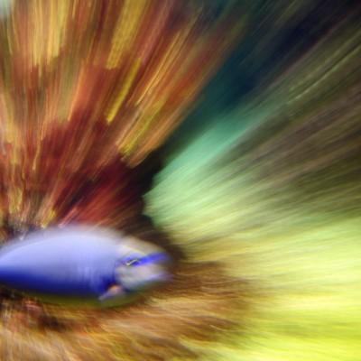 pesci138