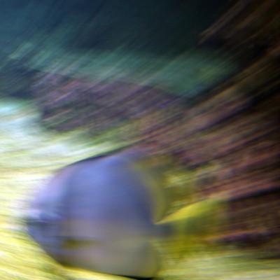 pesci139