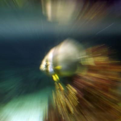 pesci150
