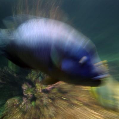 pesci151