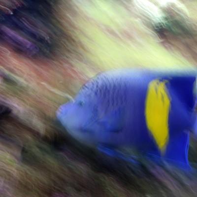 pesci154