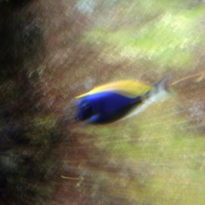 pesci157