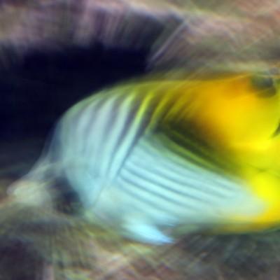 pesci159