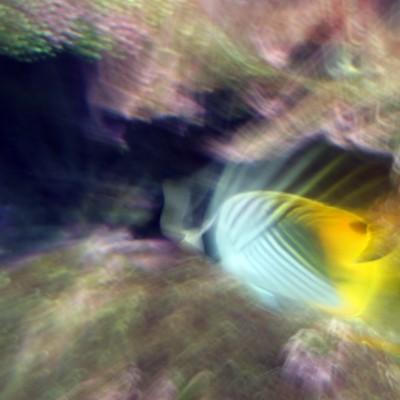 pesci182
