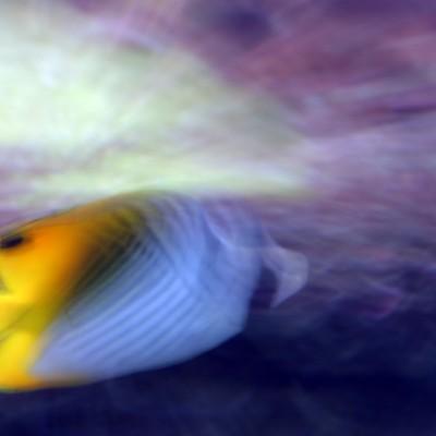 pesci183
