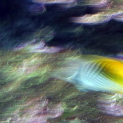 pesci184