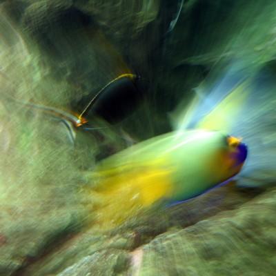 pesci191