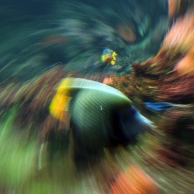 pesci192