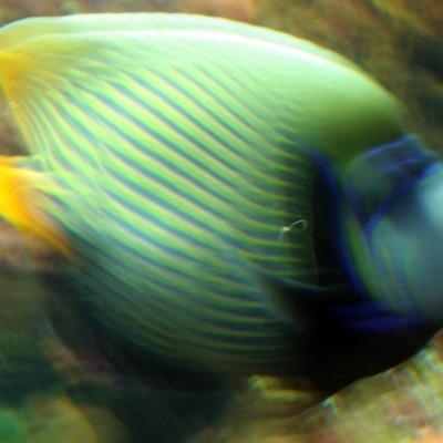 pesci193
