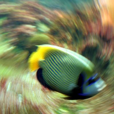 pesci194