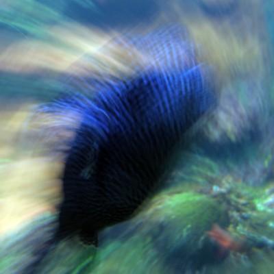 pesci197